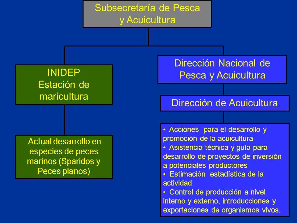 Subsecretaría de Pesca y Acuicultura Dirección de Acuicultura INIDEP Estación de maricultura Acciones para el desarrollo y promoción de la acuicultura
