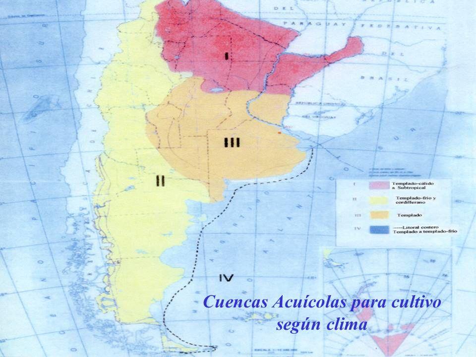 Antecedentes de la Acuicultura en Argentina Inicios del siglo XX se introdujeron salmónidos para el desarrollo de pesca deportiva Década del 70 se inicia la explotación de trucha arcoiris en forma artesanal para consumo.