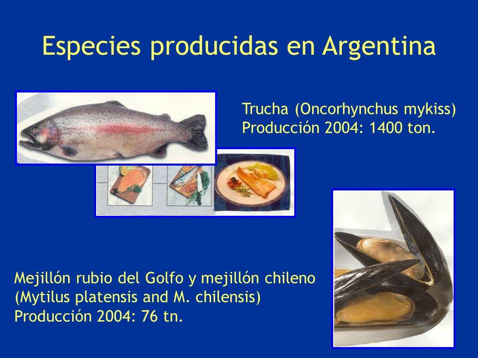 Trucha (Oncorhynchus mykiss) Producción 2004: 1400 ton. Mejillón rubio del Golfo y mejillón chileno (Mytilus platensis and M. chilensis) Producción 20