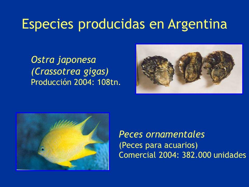 Ostra japonesa (Crassotrea gigas) Producción 2004: 108tn. Peces ornamentales (Peces para acuarios) Comercial 2004: 382.000 unidades Especies producida