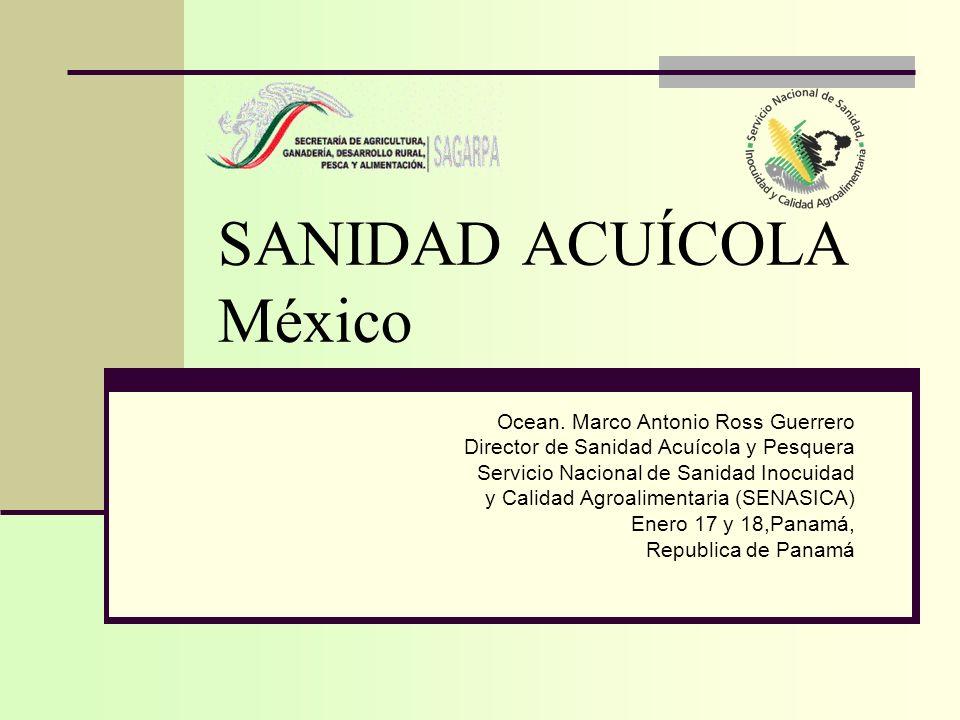 SANIDAD ACUÍCOLA México Ocean. Marco Antonio Ross Guerrero Director de Sanidad Acuícola y Pesquera Servicio Nacional de Sanidad Inocuidad y Calidad Ag