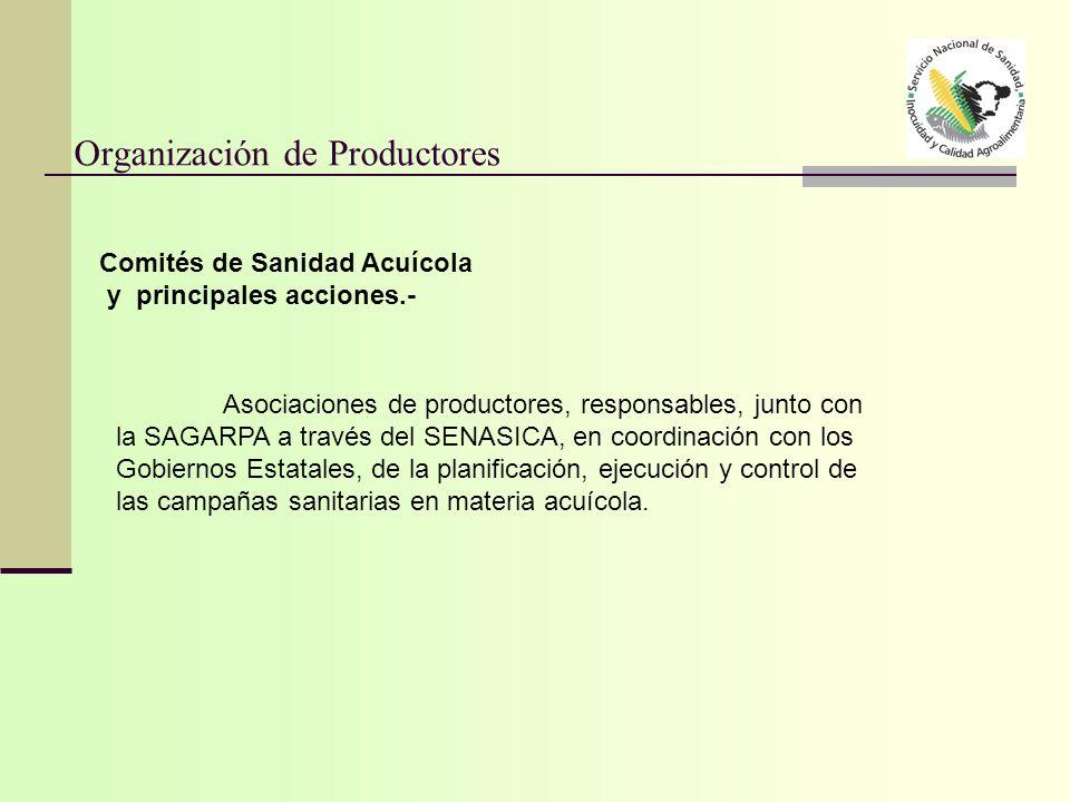Organización de Productores Asociaciones de productores, responsables, junto con la SAGARPA a través del SENASICA, en coordinación con los Gobiernos E