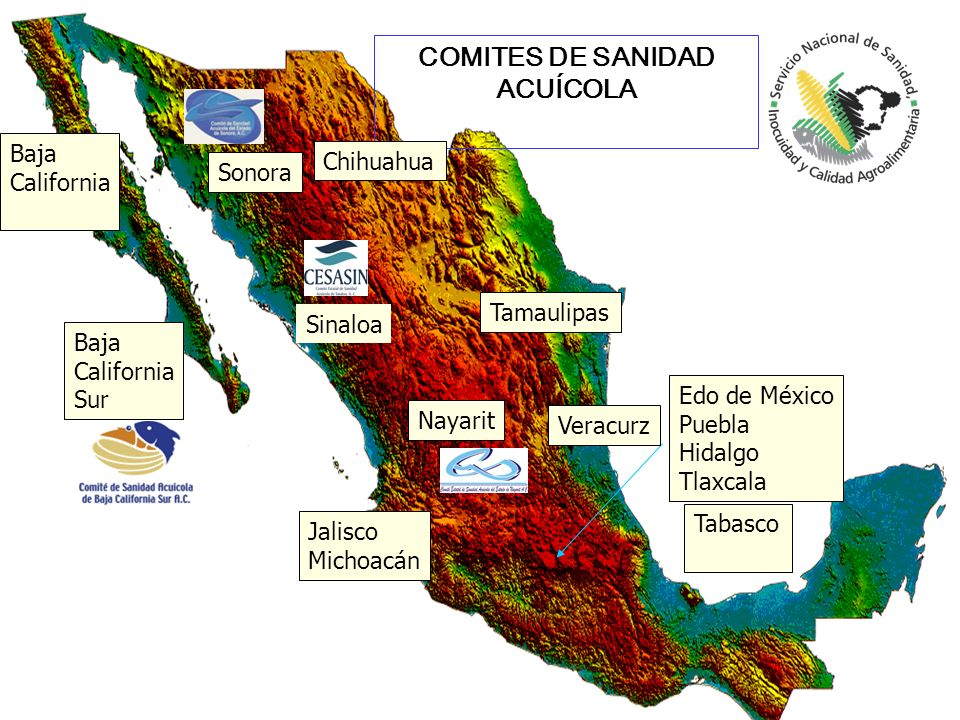 Sinaloa Nayarit Sonora Tamaulipas COMITES DE SANIDAD ACUÍCOLA Jalisco Michoacán Baja California Sur Edo de México Puebla Hidalgo Tlaxcala Chihuahua Ta