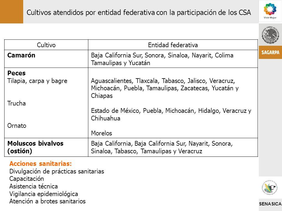 SENASICA CultivoEntidad federativa CamarónBaja California Sur, Sonora, Sinaloa, Nayarit, Colima Tamaulipas y Yucatán Peces Tilapia, carpa y bagre Truc