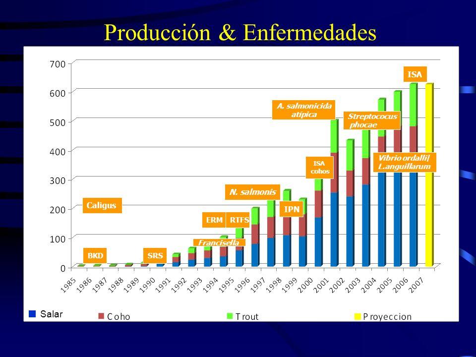 Producción & Enfermedades Caligus BKDSRS ERMRTFS N. salmonis Francisella A. salmonicida atípica IPN ISA cohos Streptococus phocae Vibrio ordalli/ L.an