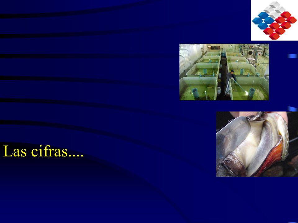 Producción acuícola en Chile Segundo productor mundial de salmónidos.