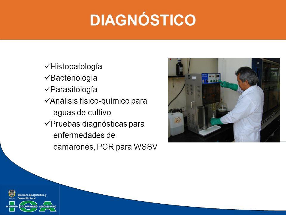 DIAGNÓSTICO Histopatología Bacteriología Parasitología Análisis físico-químico para aguas de cultivo Pruebas diagnósticas para enfermedades de camaron