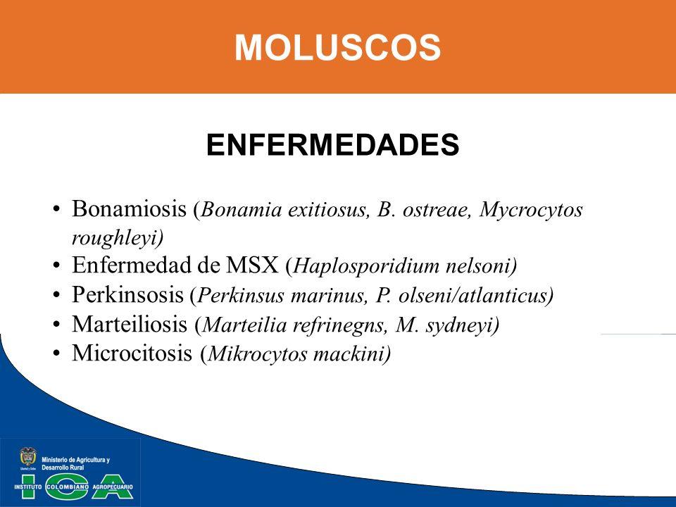 MOLUSCOS ENFERMEDADES Bonamiosis (Bonamia exitiosus, B. ostreae, Mycrocytos roughleyi) Enfermedad de MSX (Haplosporidium nelsoni) Perkinsosis (Perkins
