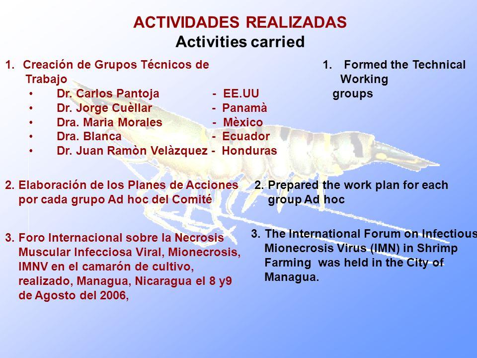 ACTIVIDADES REALIZADAS Activities carried 1.Creación de Grupos Técnicos de Trabajo Dr. Carlos Pantoja - EE.UU Dr. Jorge Cuèllar - Panamà Dra. Maria Mo