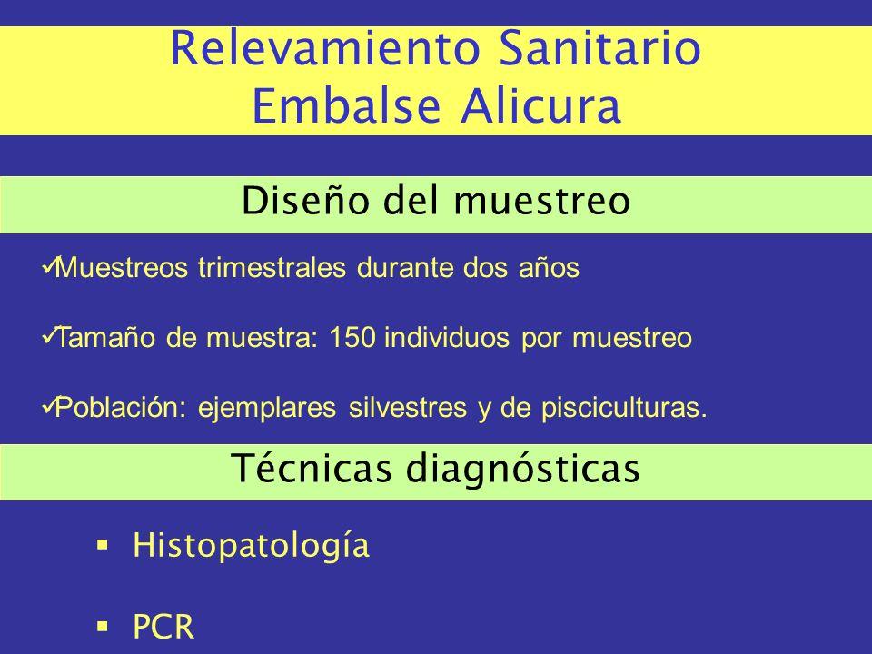 Estado sanitario - PECES Necrosis hematopoyética epizoótica Necrosis hematopoyética infecciosa Herpesvirosis del Oncorhynchus masou (Enfermedad de los salmónidos por el herpesvirus tipo 2) Viremia primaveral de la carpa Septicemia hemorrágica viral Virosis del bagre de canal (Herpesvirus de Ictaluridae tipo 1) Encefalopatía y retinopatía virales Necrosis pancreática infecciosa Anemia infecciosa del salmón Síndrome ulcerante epizoótico Renibacteriosis (Renibacterium salmoninarum) Septicemia entérica del bagre (Edwardsiella ictaluri) Piscirickettsiosis (Piscirickettsia salmonis) Girodactilosis (Gyrodactylus salaris) Iridovirosis de la dorada japonesa Iridovirosis del esturión blanco Herpesvirosis de la carpa koi