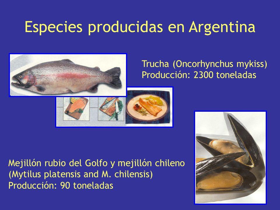 Ostra japonesa (Crassotrea gigas) Producción: 138 toneladas Peces ornamentales (Peces para acuarios) Comercial: 382.000 unidades Especies producidas en Argentina
