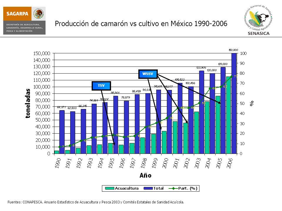 Producción de camarón vs cultivo en México 1990-2006 TSV WSSV Fuentes: CONAPESCA. Anuario Estadístico de Acuacultura y Pesca 2003 y Comités Estatales