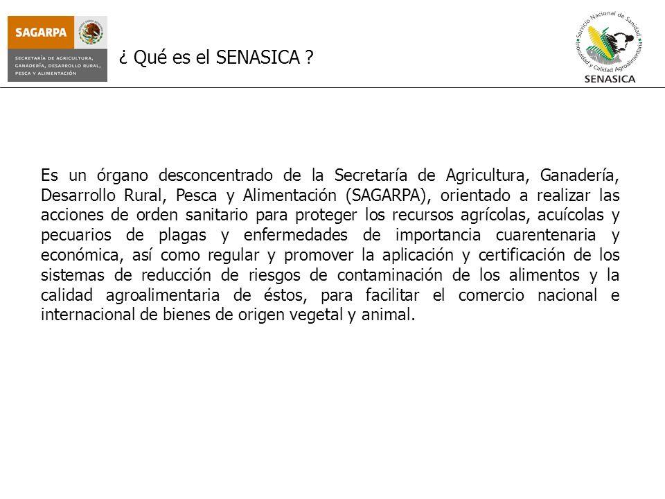 Es un órgano desconcentrado de la Secretaría de Agricultura, Ganadería, Desarrollo Rural, Pesca y Alimentación (SAGARPA), orientado a realizar las acc