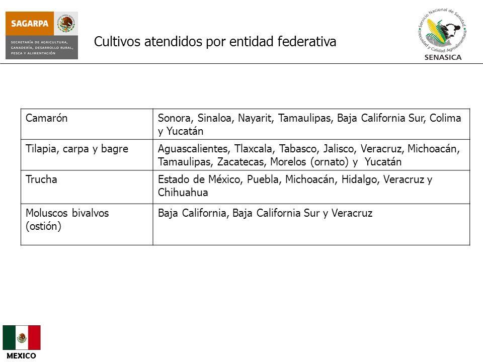 CamarónSonora, Sinaloa, Nayarit, Tamaulipas, Baja California Sur, Colima y Yucatán Tilapia, carpa y bagreAguascalientes, Tlaxcala, Tabasco, Jalisco, V