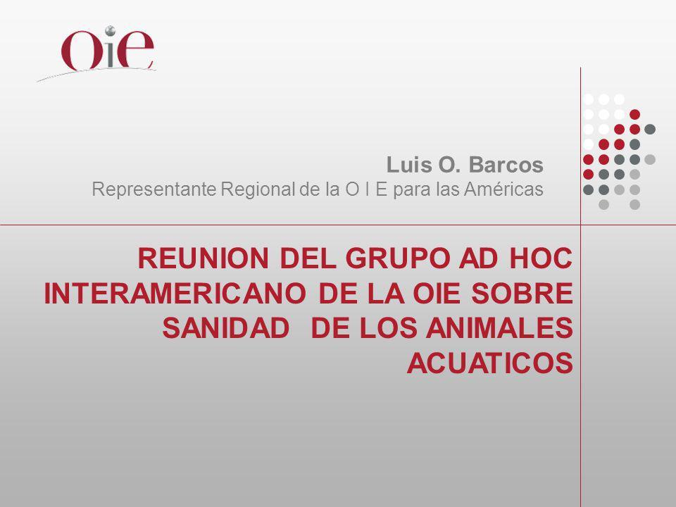 REUNION DEL GRUPO AD HOC INTERAMERICANO DE LA OIE SOBRE SANIDAD DE LOS ANIMALES ACUATICOS Luis O. Barcos Representante Regional de la O I E para las A