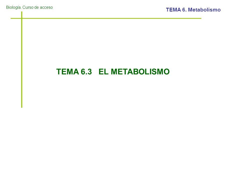 Biología. Curso de acceso TEMA 6. Metabolismo TEMA 6.3 EL METABOLISMO