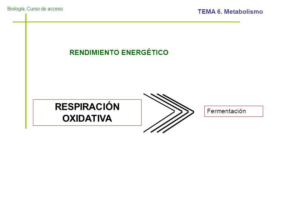 Biología. Curso de acceso TEMA 6. Metabolismo RENDIMIENTO ENERGÉTICO RESPIRACIÓN OXIDATIVA Fermentación