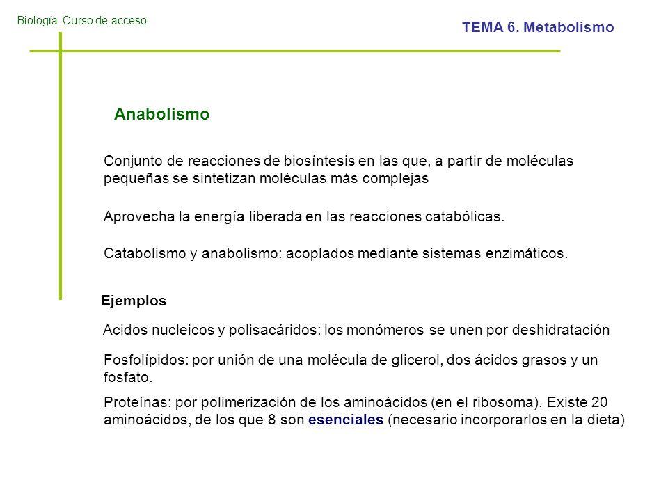 Biología. Curso de acceso TEMA 6. Metabolismo Anabolismo Conjunto de reacciones de biosíntesis en las que, a partir de moléculas pequeñas se sintetiza