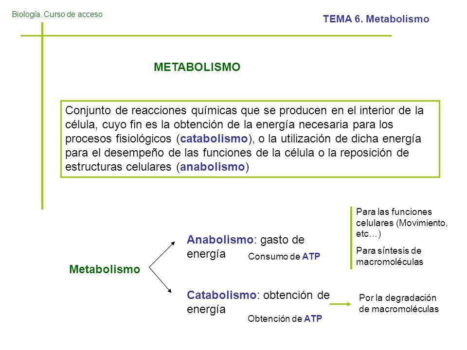 Biología. Curso de acceso TEMA 6. Metabolismo METABOLISMO Conjunto de reacciones químicas que se producen en el interior de la célula, cuyo fin es la