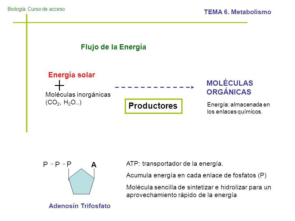 Biología. Curso de acceso TEMA 6. Metabolismo Flujo de la Energía Productores Energía solar Moléculas inorgánicas (CO 2, H 2 O..) MOLÉCULAS ORGÁNICAS