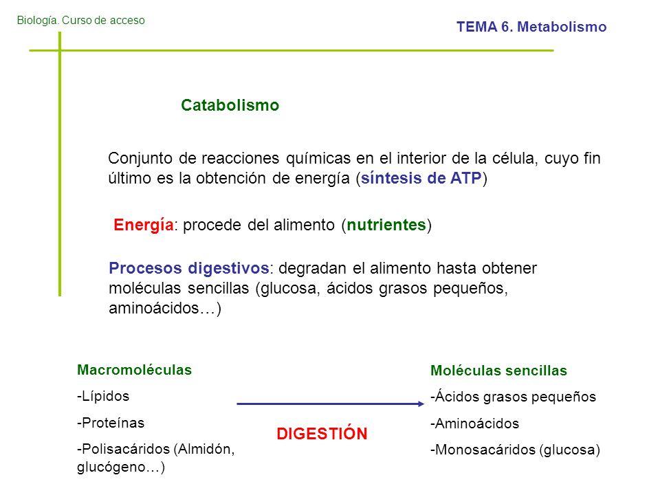 Biología. Curso de acceso TEMA 6. Metabolismo Procesos digestivos: degradan el alimento hasta obtener moléculas sencillas (glucosa, ácidos grasos pequ