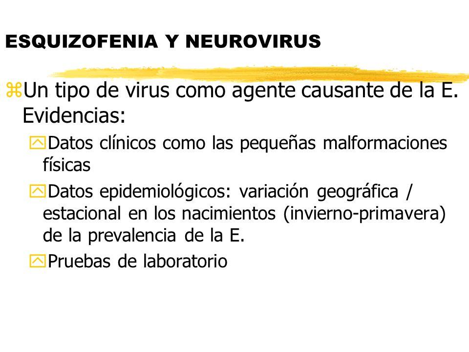 ESQUIZOFENIA Y NEUROVIRUS zUn tipo de virus como agente causante de la E. Evidencias: yDatos clínicos como las pequeñas malformaciones físicas yDatos