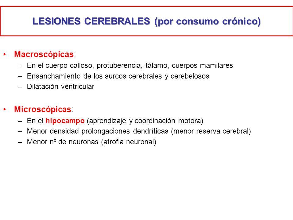 LESIONES CEREBRALES (por consumo crónico) Macroscópicas: –En el cuerpo calloso, protuberencia, tálamo, cuerpos mamilares –Ensanchamiento de los surcos