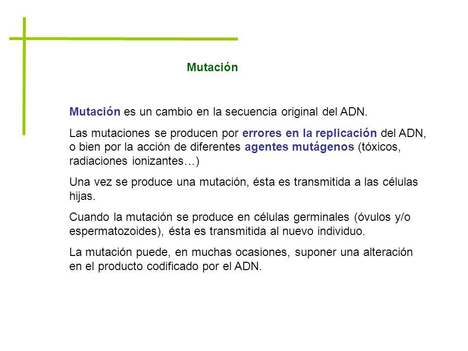 Mutación Mutación es un cambio en la secuencia original del ADN. Las mutaciones se producen por errores en la replicación del ADN, o bien por la acció