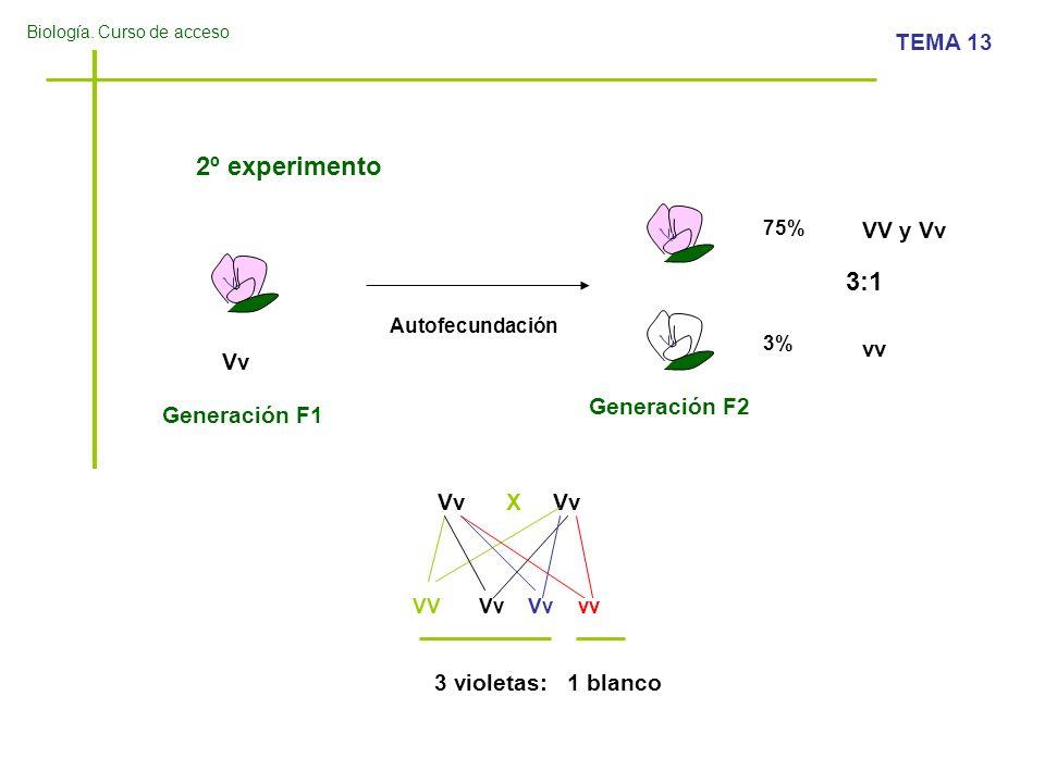 Biología. Curso de acceso TEMA 13 2º experimento Generación F1 Generación F2 Vv 75% 3% 3:1 Autofecundación Vv X VVVv vv 3 violetas: 1 blanco VV y Vv v