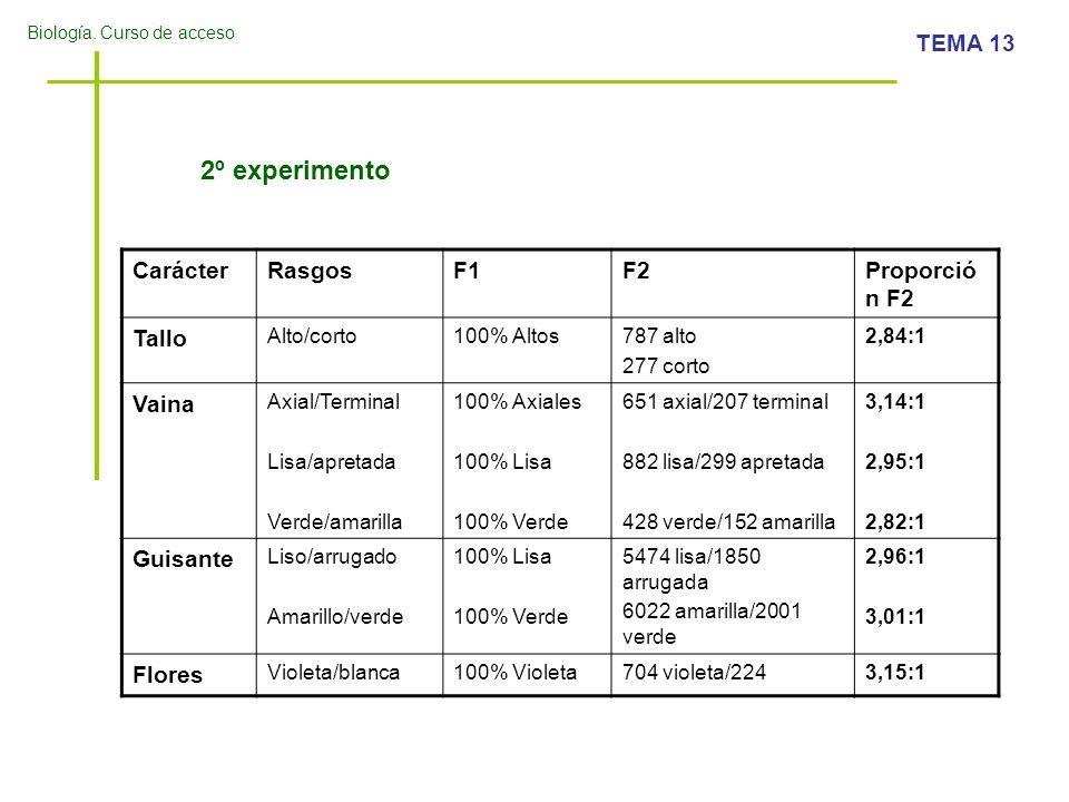 Biología. Curso de acceso TEMA 13 2º experimento CarácterRasgosF1F2Proporció n F2 Tallo Alto/corto100% Altos787 alto 277 corto 2,84:1 Vaina Axial/Term