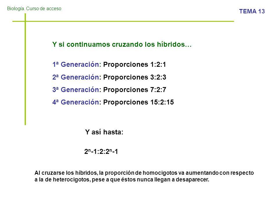 Biología. Curso de acceso TEMA 13 Y si continuamos cruzando los híbridos… 1ª Generación: Proporciones 1:2:1 2ª Generación: Proporciones 3:2:3 3ª Gener