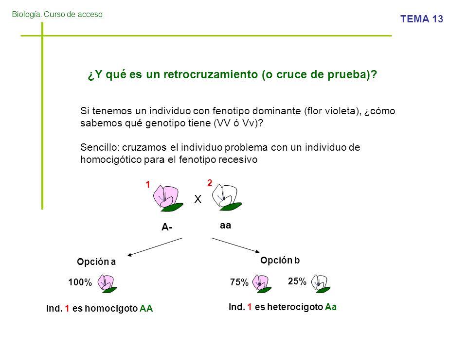 Biología. Curso de acceso TEMA 13 ¿Y qué es un retrocruzamiento (o cruce de prueba)? Si tenemos un individuo con fenotipo dominante (flor violeta), ¿c