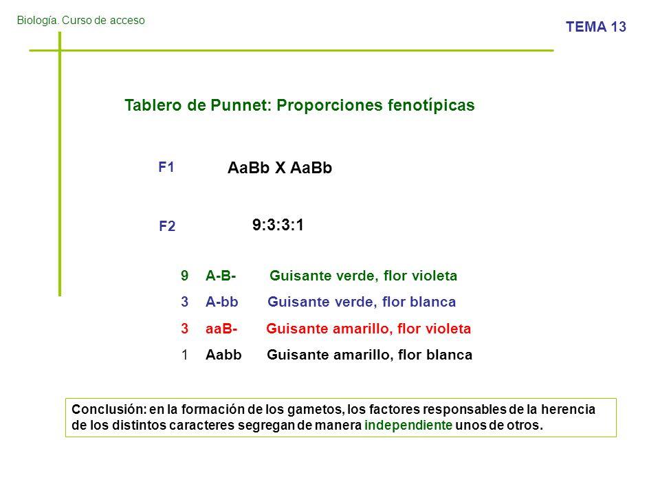 Biología. Curso de acceso TEMA 13 Tablero de Punnet: Proporciones fenotípicas AaBb X AaBb 9:3:3:1 F2 F1 9A-B- Guisante verde, flor violeta 3A-bb Guisa