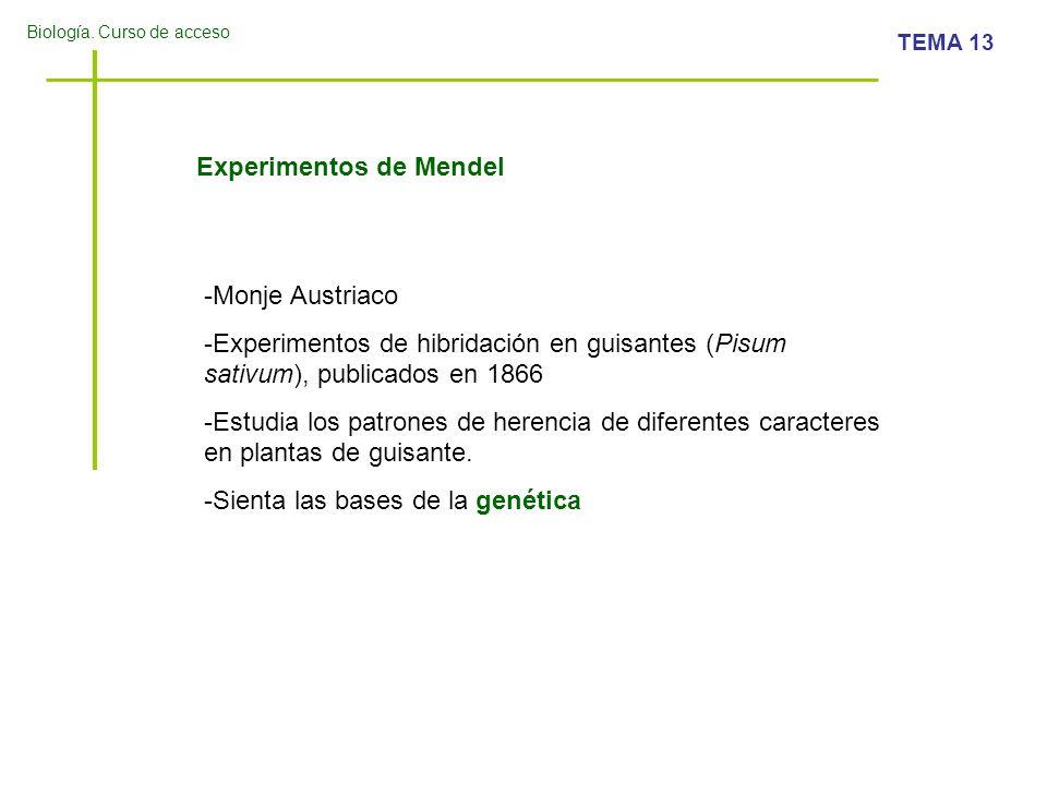 Biología. Curso de acceso TEMA 13 Experimentos de Mendel -Monje Austriaco -Experimentos de hibridación en guisantes (Pisum sativum), publicados en 186
