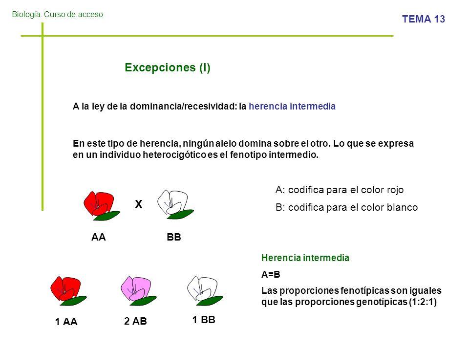 Biología. Curso de acceso TEMA 13 Excepciones (I) A la ley de la dominancia/recesividad: la herencia intermedia X En este tipo de herencia, ningún ale