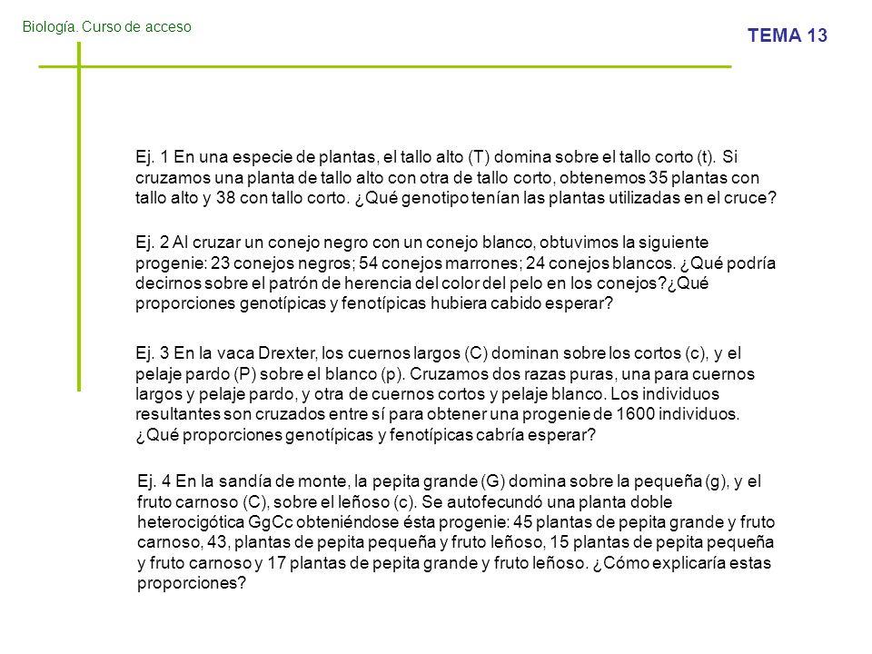 Biología. Curso de acceso TEMA 13 Ej. 1 En una especie de plantas, el tallo alto (T) domina sobre el tallo corto (t). Si cruzamos una planta de tallo