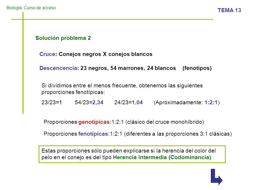 Biología. Curso de acceso TEMA 13 Solución problema 2 Cruce: Conejos negros X conejos blancos Descencencia: 23 negros, 54 marrones, 24 blancos (fenoti