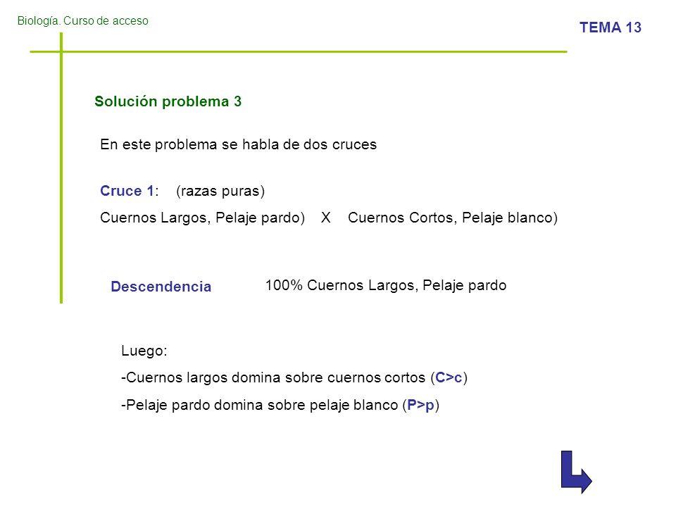 Biología. Curso de acceso TEMA 13 Solución problema 3 Cruce 1: (razas puras) Cuernos Largos, Pelaje pardo) X Cuernos Cortos, Pelaje blanco) Descendenc