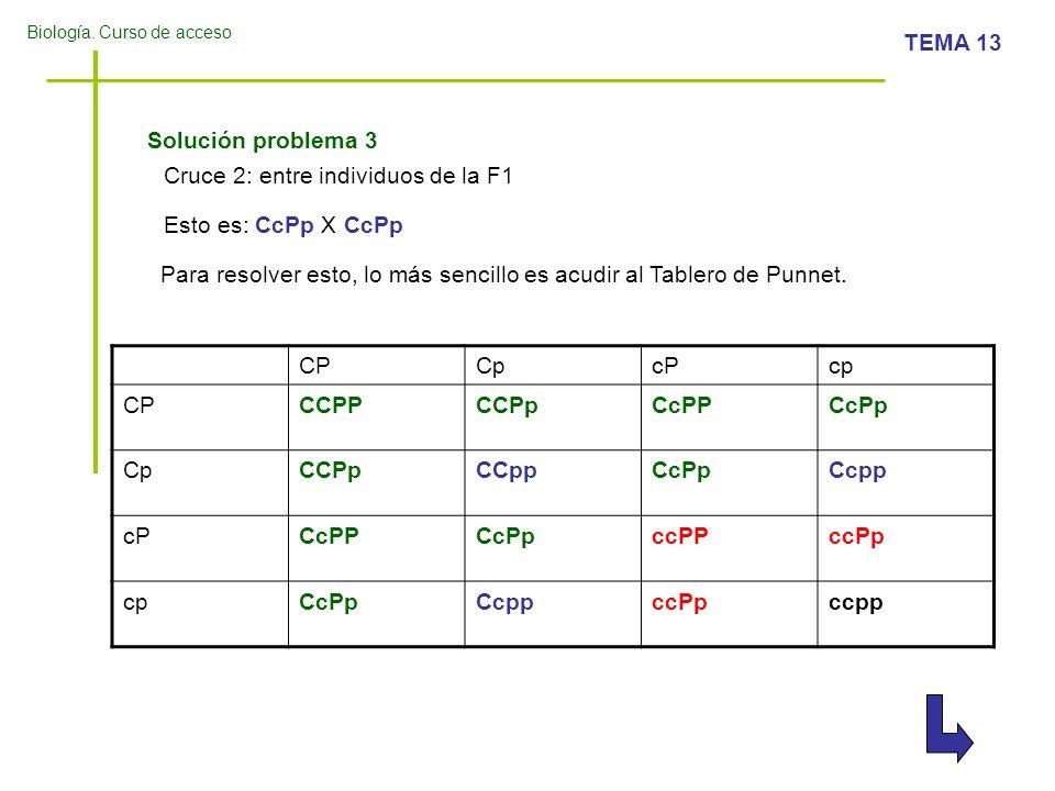 Biología. Curso de acceso TEMA 13 Cruce 2: entre individuos de la F1 Esto es: CcPp X CcPp Para resolver esto, lo más sencillo es acudir al Tablero de