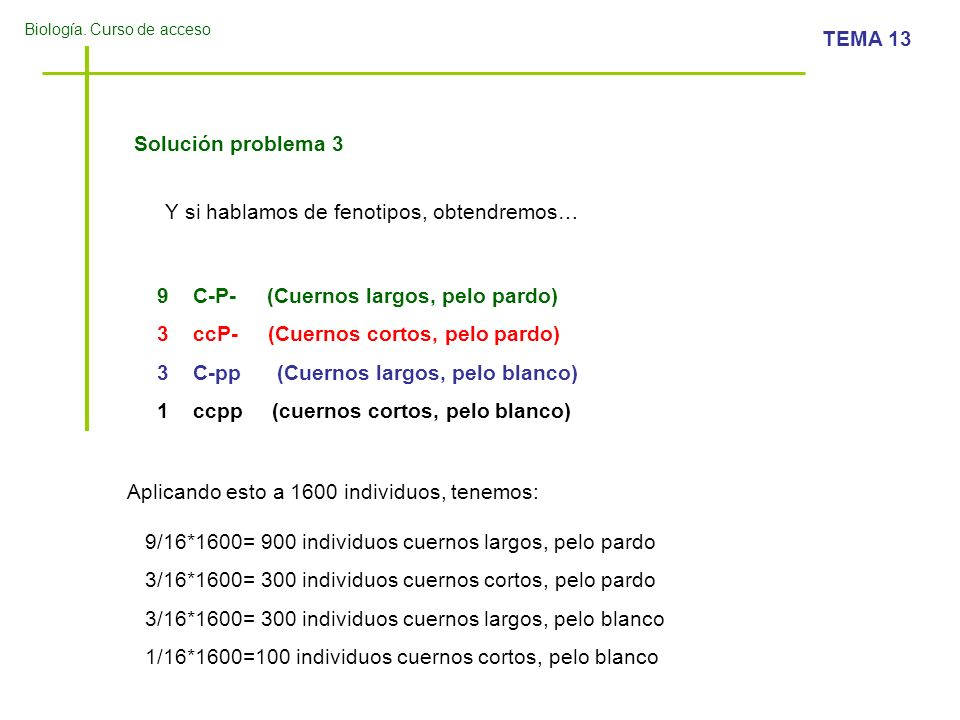 Biología. Curso de acceso TEMA 13 Solución problema 3 Y si hablamos de fenotipos, obtendremos… 9C-P- (Cuernos largos, pelo pardo) 3ccP- (Cuernos corto