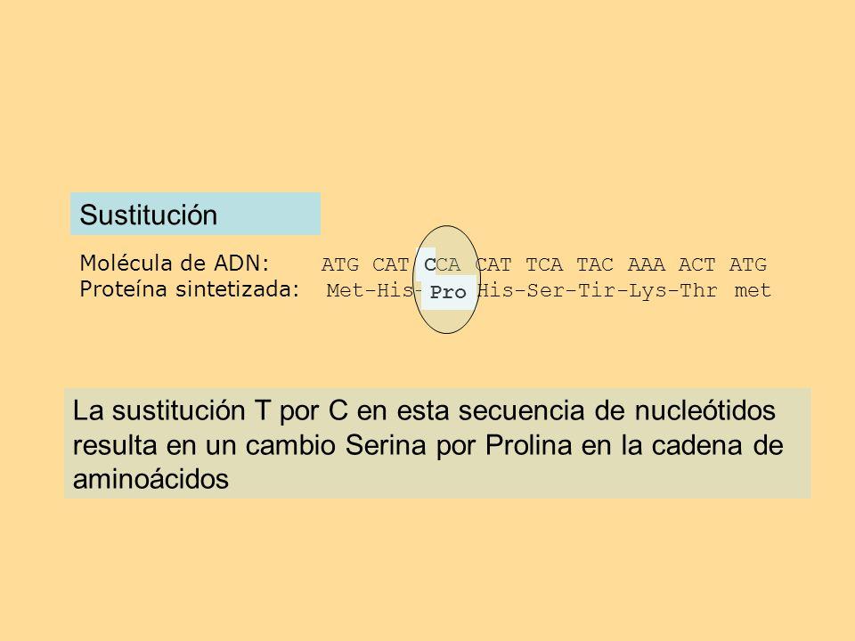 Molécula de ADN: ATG CAT TCA CAT TCA TAC AAA ACT ATG Proteína sintetizada: Met-His-Ser-His-Ser-Tir-Lys-Thr met Sustitución C Pro La sustitución T por