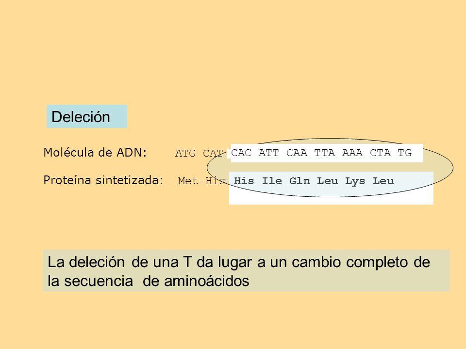 Molécula de ADN: ATG CAT TCA CAT TCA TAC AAA ACT ATG Proteína sintetizada: Met-His-Ser-His-Ser-Tir-Lys-Thr met Deleción His Ile Gln Leu Lys Leu La del