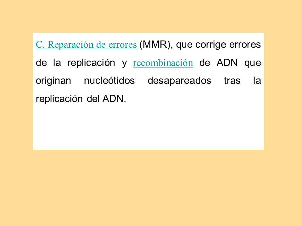 C. Reparación de errores C. Reparación de errores (MMR), que corrige errores de la replicación y recombinación de ADN que originan nucleótidos desapar