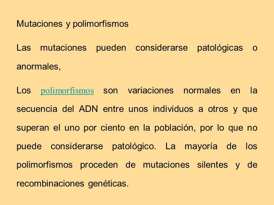 Mutaciones y polimorfismos Las mutaciones pueden considerarse patológicas o anormales, Los polimorfismos son variaciones normales en la secuencia del