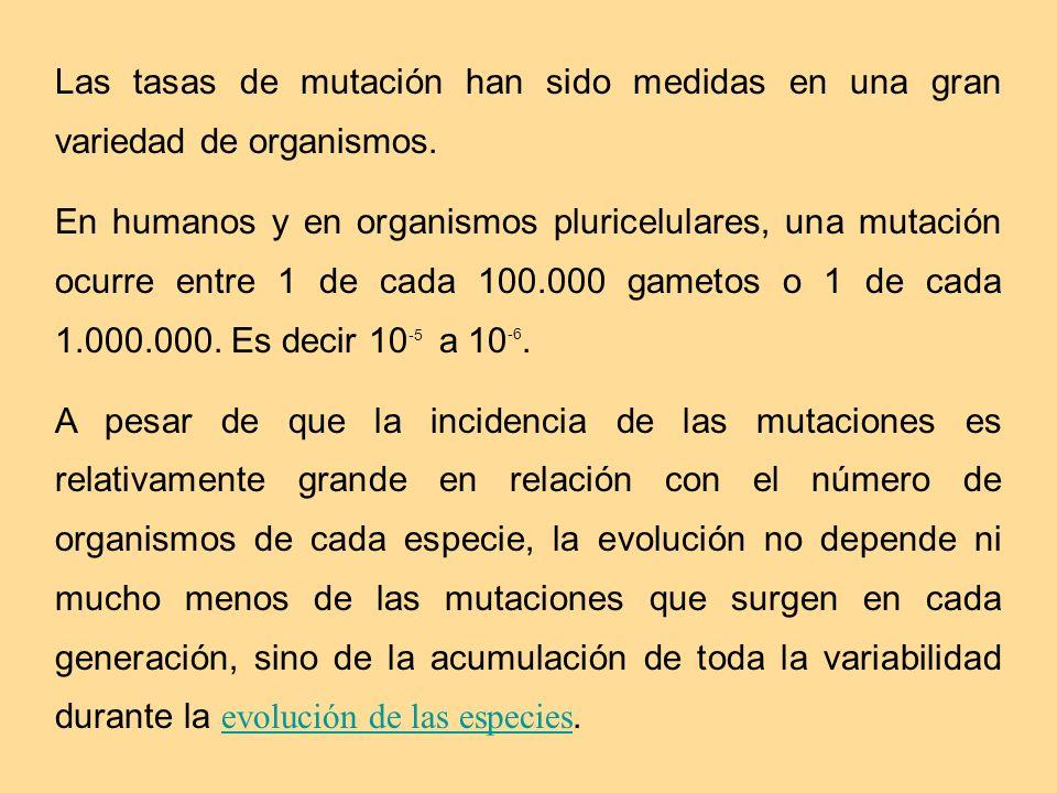 Las tasas de mutación han sido medidas en una gran variedad de organismos. En humanos y en organismos pluricelulares, una mutación ocurre entre 1 de c