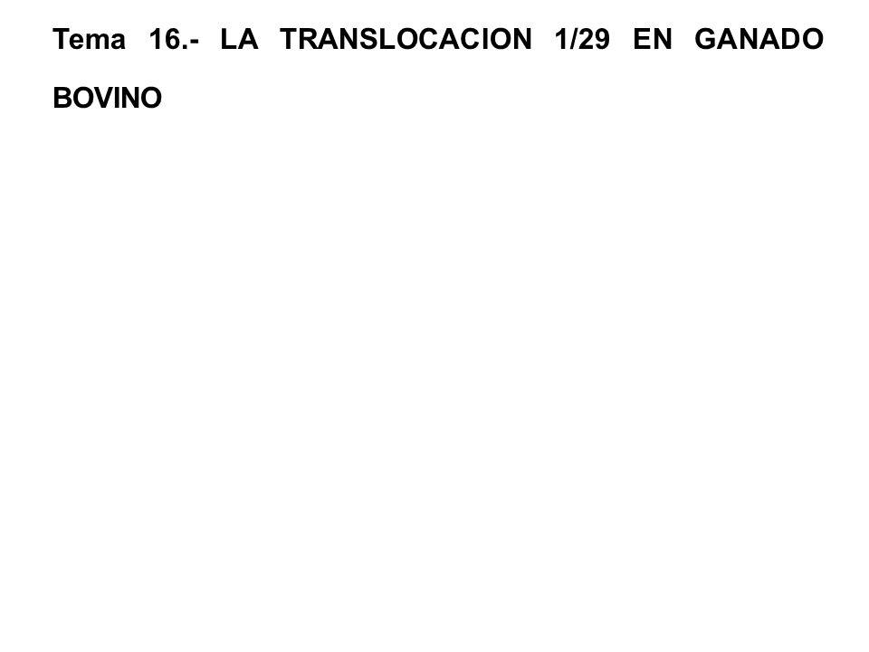 Tema 16.- LA TRANSLOCACION 1/29 EN GANADO BOVINO