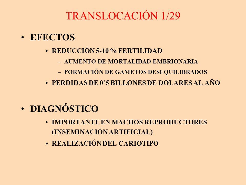 TRANSLOCACIÓN 1/29 EFECTOS REDUCCIÓN 5-10 % FERTILIDAD –AUMENTO DE MORTALIDAD EMBRIONARIA –FORMACIÓN DE GAMETOS DESEQUILIBRADOS PERDIDAS DE 05 BILLONE