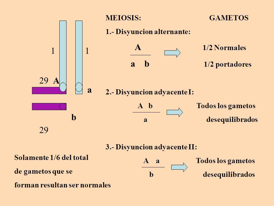 1 1 29 29 a b A MEIOSIS: GAMETOS 1.- Disyuncion alternante: A 1/2 Normales a b 1/2 portadores 2.- Disyuncion adyacente I: A b Todos los gametos a dese