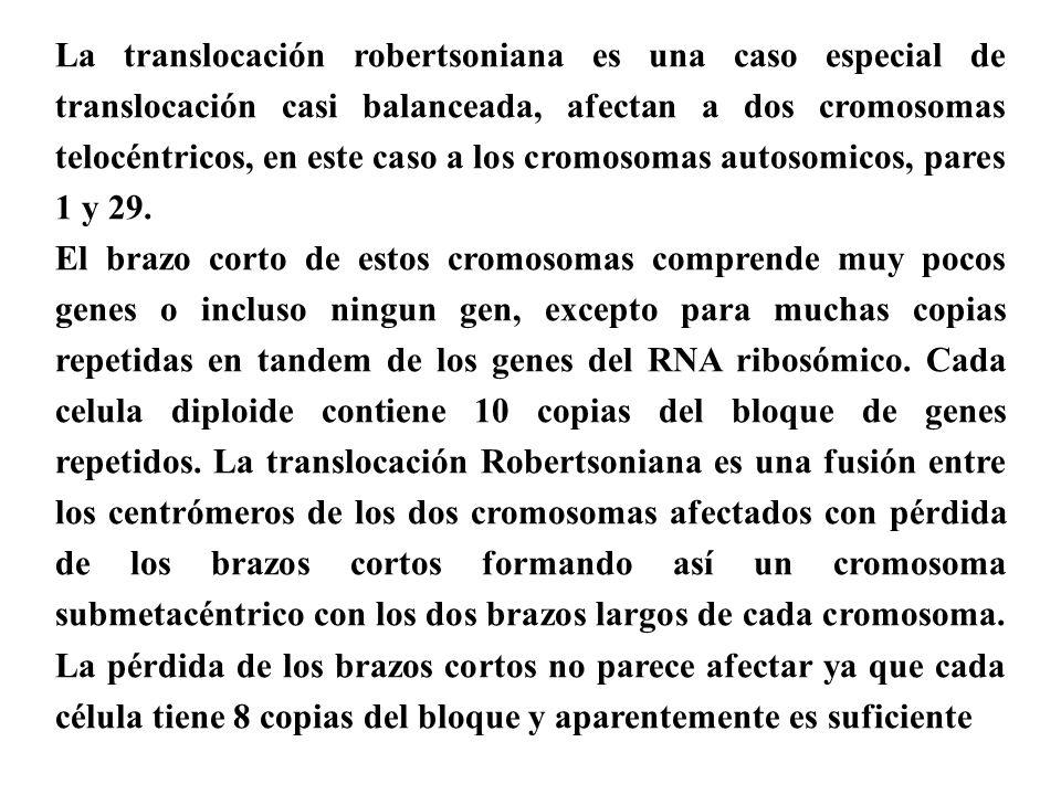 La translocación robertsoniana es una caso especial de translocación casi balanceada, afectan a dos cromosomas telocéntricos, en este caso a los cromo