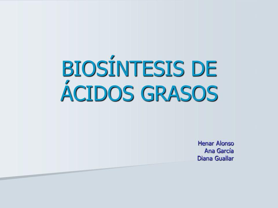 Los ácidos grasosLos ácidos grasos Biosíntesis de 16:0Biosíntesis de 16:0 Localización de la rutaLocalización de la ruta EtapasEtapas Enzimas claveEnzimas clave Balance energéticoBalance energético Biosíntesis de otros AGBiosíntesis de otros AG Regulación e integración en el metabolismoRegulación e integración en el metabolismo